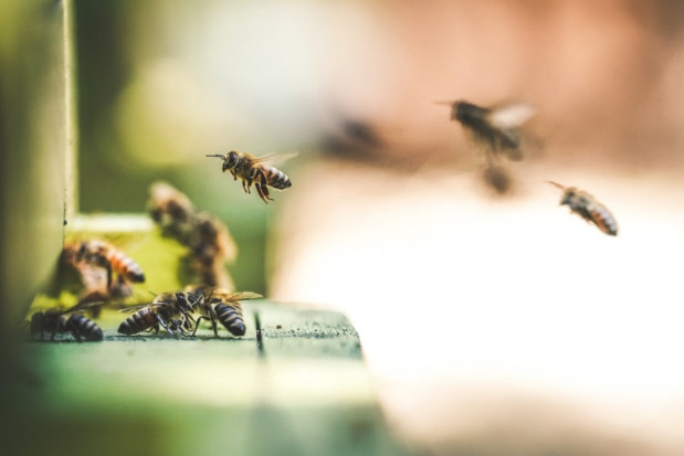 Łódź ma być przyjazna pszczołom, w mieście stanie 40 uli