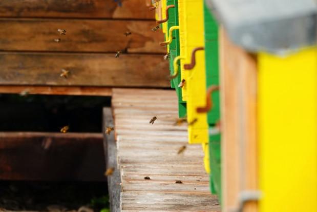 Wielkopolskie: 2 mln zł od samorządu na zakup pokarmów dla pszczół