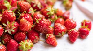 Wilno: polskie truskawki po 4 euro. Litwini czekają na krajowe owoce