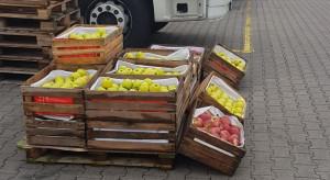 Bronisze: Jak przebiega sprzedaż jabłek deserowych?