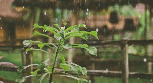 IMGW: poniedziałek najładniejszym dniem tygodnia. Idą deszcze