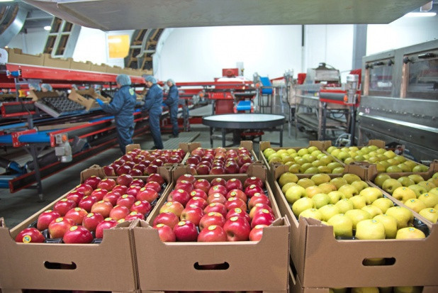 Produkcja sadownicza musi być dostosowana do potrzeb rynku