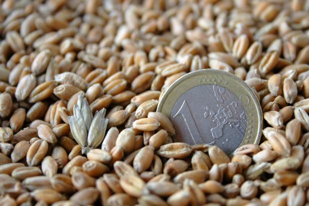 Rusza nabór wniosków o dopłaty z tytułu zużytego materiału siewnego