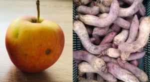Jabłka po gradzie jak krzywe buraki. Czy sieci pójdą za trendem zero waste?