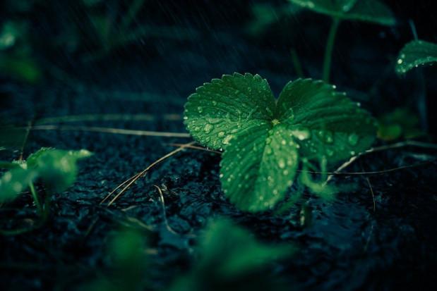 IMGW: chłodna środa z przelotnymi opadami deszczu