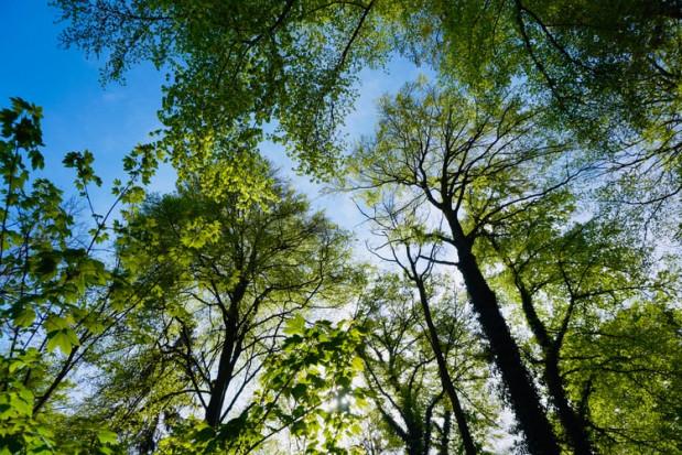 Park Bioróżnorodności zostanie otwarty w Sosnowcu