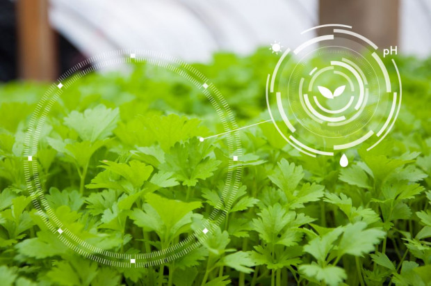 Szybka Ścieżka – Agrotech: 54 projekty z dofinansowaniem w konkursie