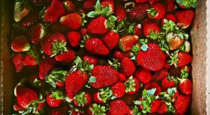 Zaciera się różnica pomiędzy cenami polskich a importowanych truskawek