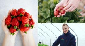 Maruszewski: Uprawa truskawek wymaga ciągłej nauki