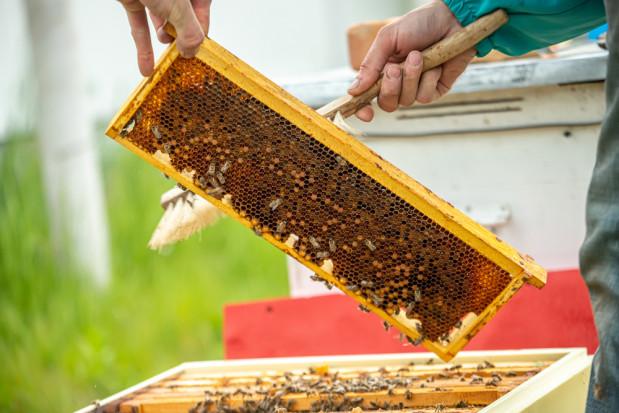 ARiMR: Rusza nabór wniosków na pomoc dla pszczelarzy