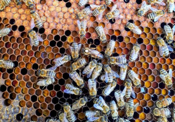 Pszczelarze do końca czerwca mogą składać wnioski o wsparcie
