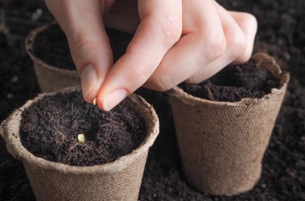 Nasiona w bibliotekach dla ogrodników-amatorów