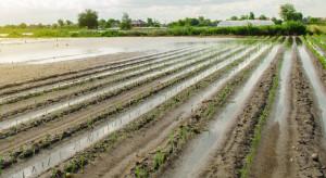 Litwa: Deszczowa wiosna spowalnia wzrost warzyw