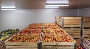 WAPA: zapasy jabłek w UE wyższe niż przed rokiem. Polskę wyprzedzają Włosi
