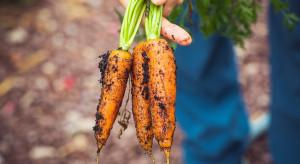 Projekt nowej ustawy reguluje kwestie rolnictwa ekologicznego