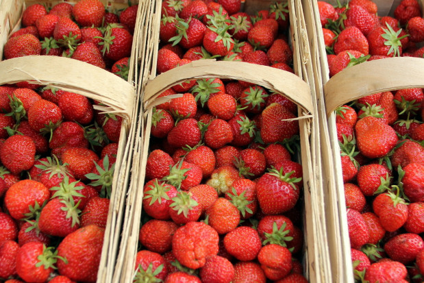 Giełda Goławin: Ceny truskawek wahają się między 17-25 zł za łubiankę