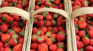Giełda Goławin: 17-25 zł za łubiankę truskawek