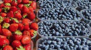 Bronisze: Tańsze importowane owoce. Ceny czereśni nadal wysokie