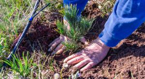 ARiMR: Rusza nabór na zalesianie i tworzenie terenów zalesionych