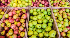 """Białorusini przestali """"lubić"""" polskie jabłka"""