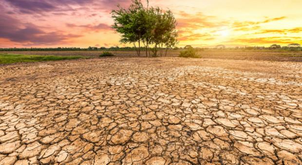 Susza zagraża rolnictwu w USA