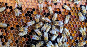 Ule i pszczoły zginęły. Właściciel szuka złodzieja