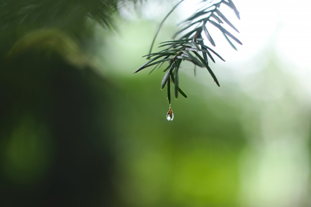 Pogoda na 5 czerwca: przelotne deszcze, a na północy burze