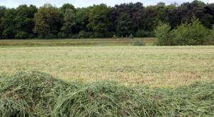 Białowieski Park Narodowy wydzierżawi 125 ha łąk dla żubrów