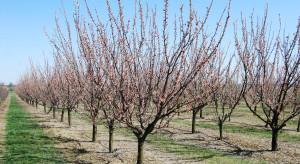 Ochrona zasobów genowych roślin ogrodniczych w IO-PIB