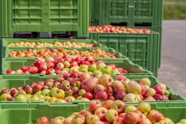 Jabłka przemysłowe: Będą dalsze obniżki cen?