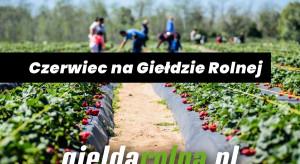 Maszyny rolnicze, akcesoria, sadzonki - sprawne e-zakupy na GiełdaRolna.pl