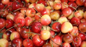 Czereśnie 2021 - jakie ceny za pierwsze krajowe owoce?