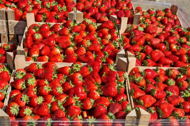Polska jest światowym producentem truskawek, ale także je importuje