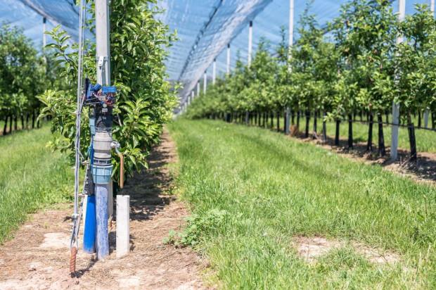 Jak kontrolować nawodnienie gleby w sadzie?