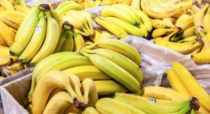 Warszawa:160 kg kokainy ukrytej w bananach