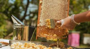 Warmińsko-mazurskie: wzrosły ceny pierwszych wiosennych miodów
