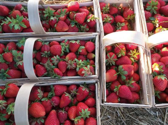 Giełda Goławin: Wzrost cen truskawek deserowych i przemysłowych
