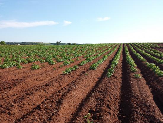 pH gleby a choroby skórki ziemniaka