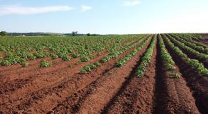 pH gleby a choroby skórki ziemniaka - jakie zagrożenia?