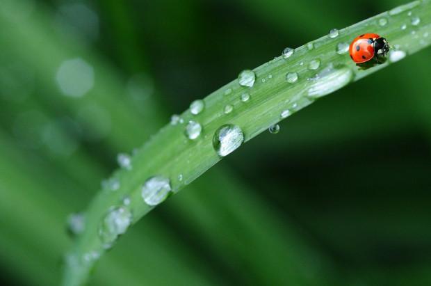 We wtorek na północy kraju przelotne deszcze i burze