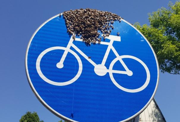 Warszawa: Rój pszczół na znaku drogowym