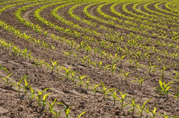 Praktyki regeneratywne w rolnictwie pomagają zapobiegać zmianom klimatu