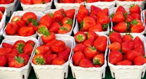 W Holandii rośnie popyt na truskawki