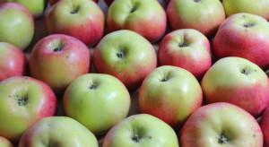 Dlaczego popyt na jabłka do sortowania jest na znikomym poziomie?