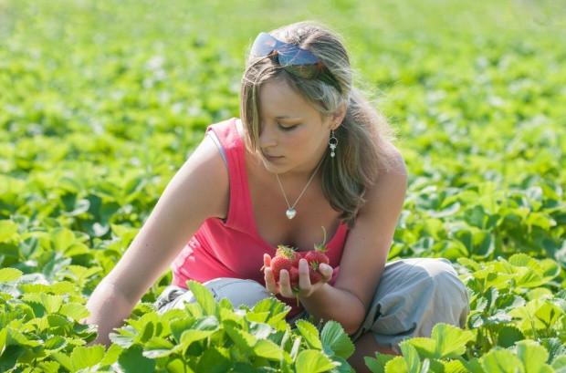 Coraz trudniej pozyskać pracowników do zbiorów owoców. Stawki rosną