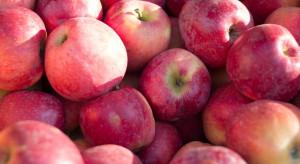 Rynek jabłek: Sprzedaż zagraniczna przebiega w wolnym tempie