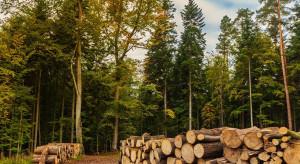 """Lasy Państwowe: to nieprawda, że w lasach trwają """"masowe cięcia"""""""
