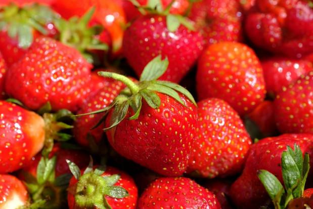 Truskawki 2021: Podaż owoców jest bardzo duża; ceny spadają
