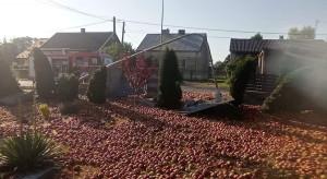 Świętokrzyskie: wypadek ciężarówki z jabłkami
