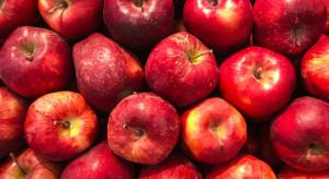 Rynek jabłek: czy sadownicy odrobią straty w nowym sezonie?